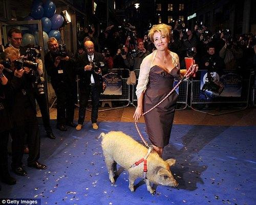 cerdo-oveja2