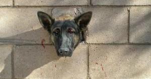 Perro atravesó su cabeza en el agujero de un muro en los Angeles