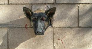 Perro queda atrapado en medio de un muro