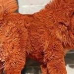 El perro más caro del mundo es un Mastín Tibetano