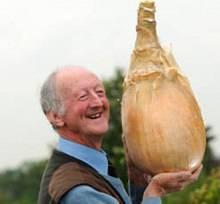 Cosechan la cebolla más grande del mundo