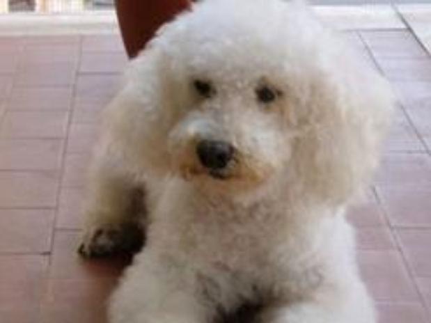 anciana deja herencia mascota perro chicco