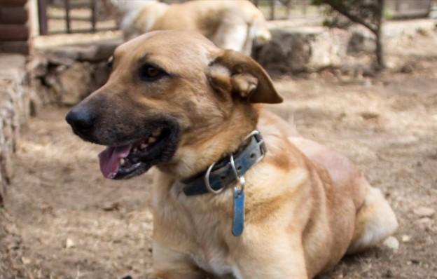 Perro impidió que niña fuera secuestrada