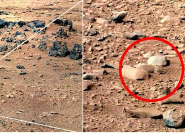 Una rata es encontrada en Marte