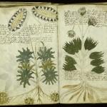Manuscrito Vonych: El libro que nadie puede leer